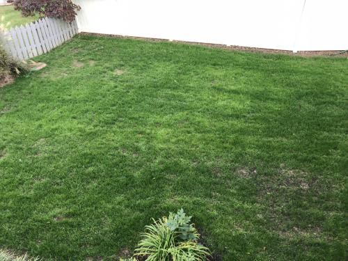 nerovnomerne zavlažený trávnik